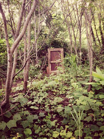 Natur Door Fantasy Mystery