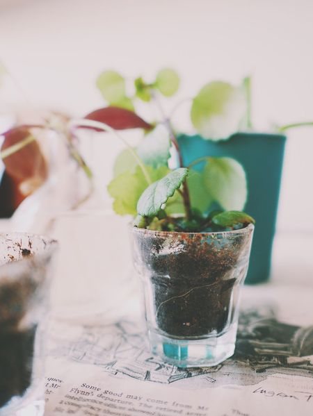 No People Indoors  Close-up Table Leaf Day Leaves Plants And Flowers Replanting Potted Plants Fragility Green Color Full Frame Indoor Photography Soil Nutrition Leaf Vein Flower Plant Growth Pots Roots Roots And Branches Potted Plant Freshness