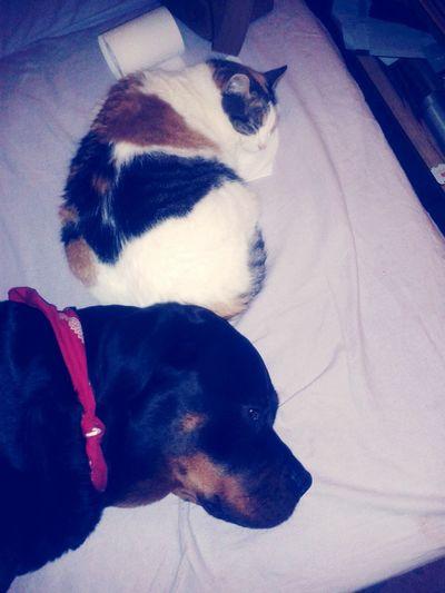 "meine zwei Weiberz"" Relaxen I♡mydog I ♡ Cats Lilli Mit Freya Mein Hund Meine Katze Pets Dog Domestic Animals One Animal Animal Themes Animal No People Indoors"