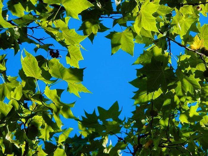 A little piece of sky Sky Skylovers WORLD_BESTSKY Sky_sultans Bluesky CleanSky Summermood Summer Sunnyday Sun Tree Leaves Summerleaves Green Audiovisualuruguay Igersuruguay Igersoftheday Igerspostales Portadaigers Hellofaday