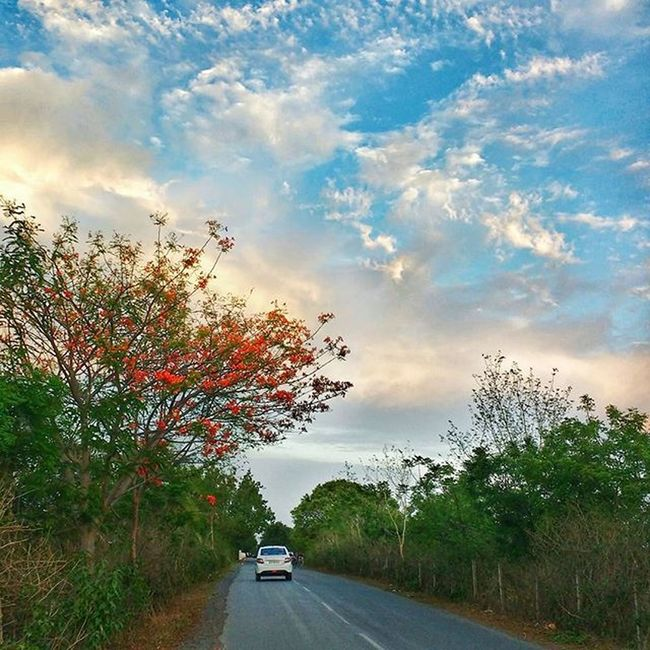 Beautiful roads of Bastar Goodmorning Goodmorningpost Road Roadtrip India Indian_photographers Instalike Instadaily Instacool Nature_perfection Nature