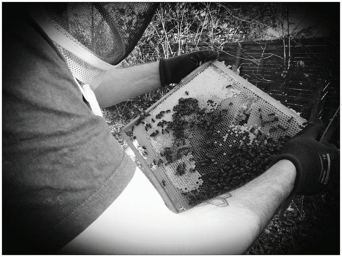 BeeUty Wabenwerk Bienen  Frühjahr Imkerei Meise3 Zwanzig17