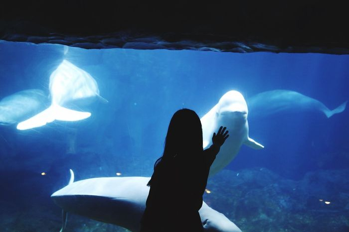 White Whale Beluga Animal Head  Sea Swimming One Animal Animals In The Wild Underwater Animal Themes Sea Life Smile Nature Enjoying Life Taking Photos Hello World Popular Photos Fall Beauty Beauty In Nature Blue