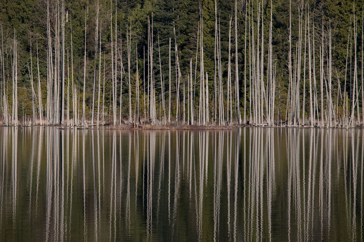 Trees reflecting on lake at forest