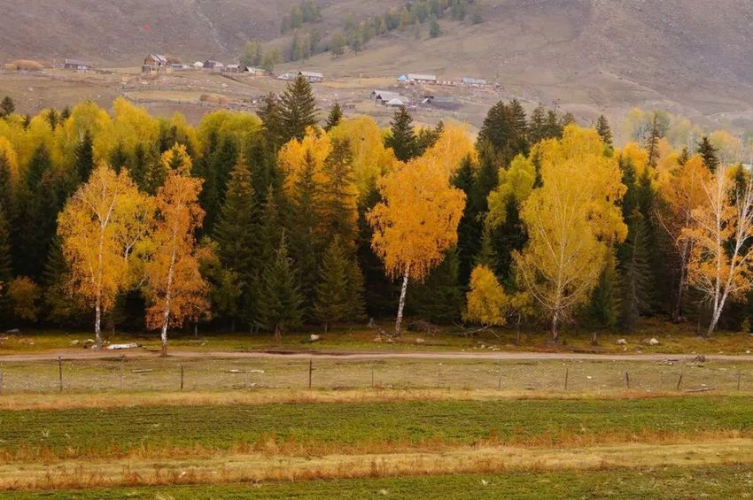 China xinjiang Tree Autumn Beauty In Nature Outdoors Nature Landscape No People
