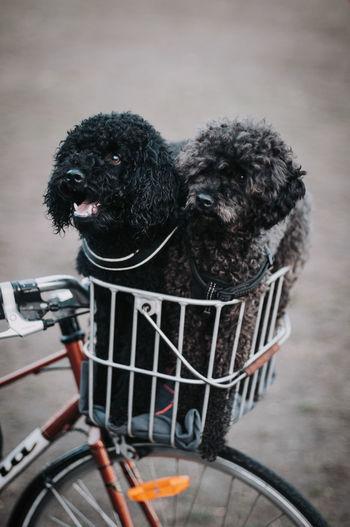 Hunde Dog Dogs