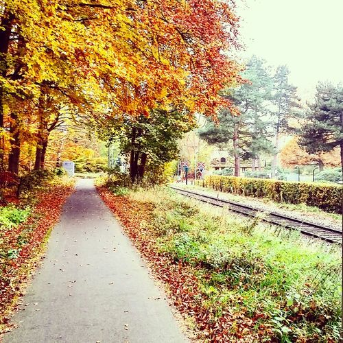Fall in Denmark Denmark Fall Made In Denmark Seasons Fall Beauty Fall Colors Fall Leaves Fall Season Beutiful  Colors Nice Chill Relaxed For Sale