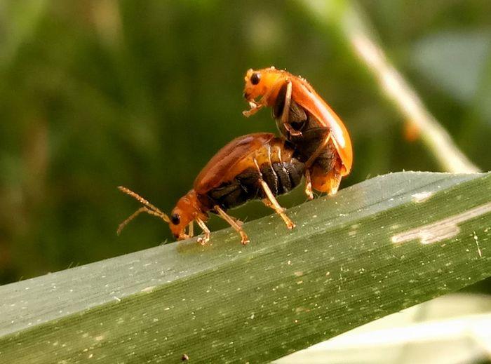 Lovely morning scene. Nature Bush Morningscene Animals Animal Themes Ladybug Beetle