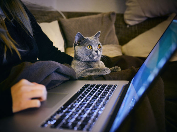 Close-up of surprised cat looking at laptop screen