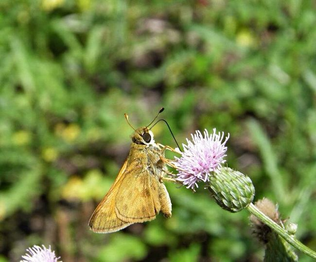 Moth On Flower Moth Nature Photography Macro_collection Bugs Life Macro Photography Up Close And Personal Nature_collection Nature Photograhy