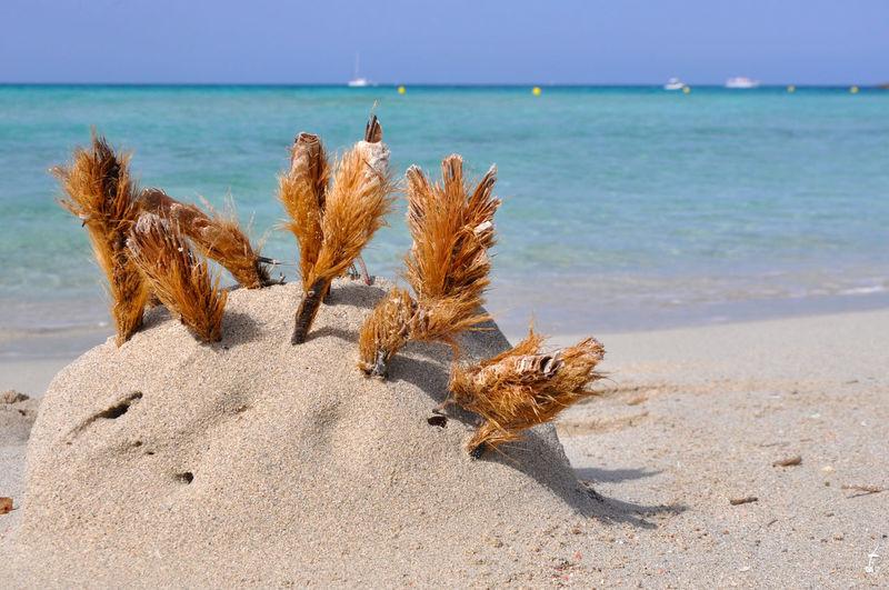 Dead plant on beach against sea