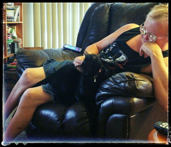 Olliekitteh pretending to be a lap kitteh.