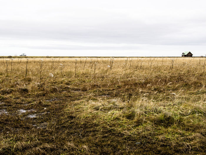 Land Field Sky Landscape Plant Environment Grass Nature Growth Scenics - Nature Tranquil Scene Cloud - Sky Rural Scene Day Tranquility Beauty In Nature Agriculture Non-urban Scene Horizon Over Land No People Outdoors Iceland_collection Iceland