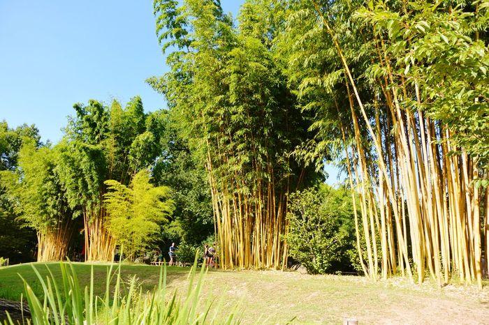 Petite promenade dans le jardin d'inspiration asiatique Asian Garden Bamboo Trees Zen La Bambouseraie Anduze Holiday Memories South France