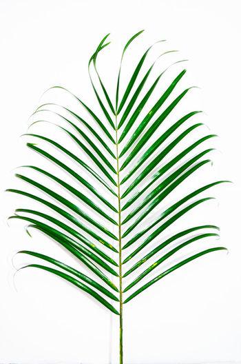 Green Minimalism Palm Plant Stripes Everywhere White Background