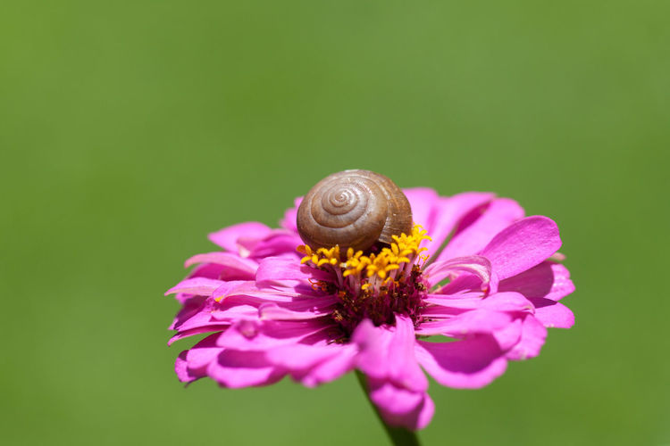 Animal Animal Themes Animal Wildlife Animals In The Wild Beauty In Nature Close-up Day Flower Flower Head Fragility Freshness Gastropod Insect Nature No People One Animal Outdoors Pollination Purple Snail