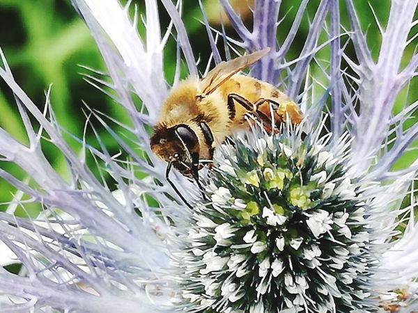Working Animals In The Wild Insect Animal Themes Close-up Flower Plant One Animal Beauty In Nature