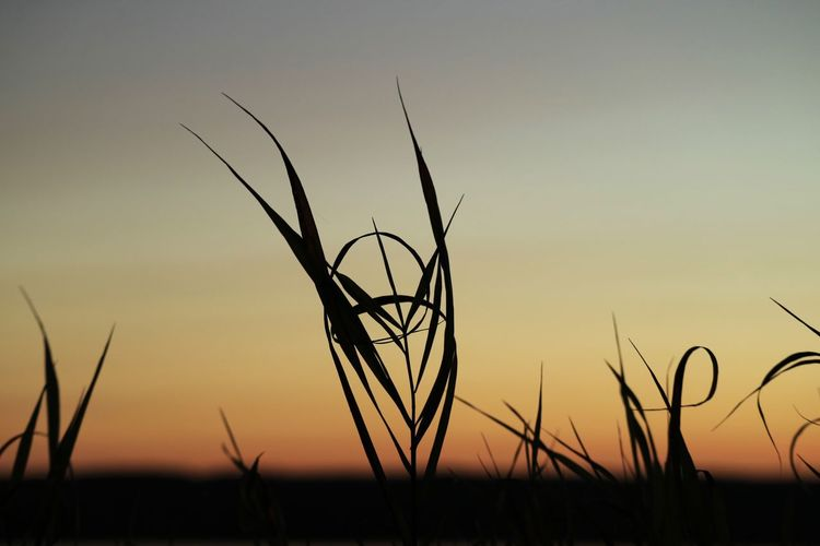 EyeEm Selects Sunset Sky Plant Beauty In Nature Silhouette Tranquility Nature Tranquil Scene Scenics - Nature Growth No People Orange Color Outdoors Grass Land Landscape Field Non-urban Scene Idyllic Focus On Foreground