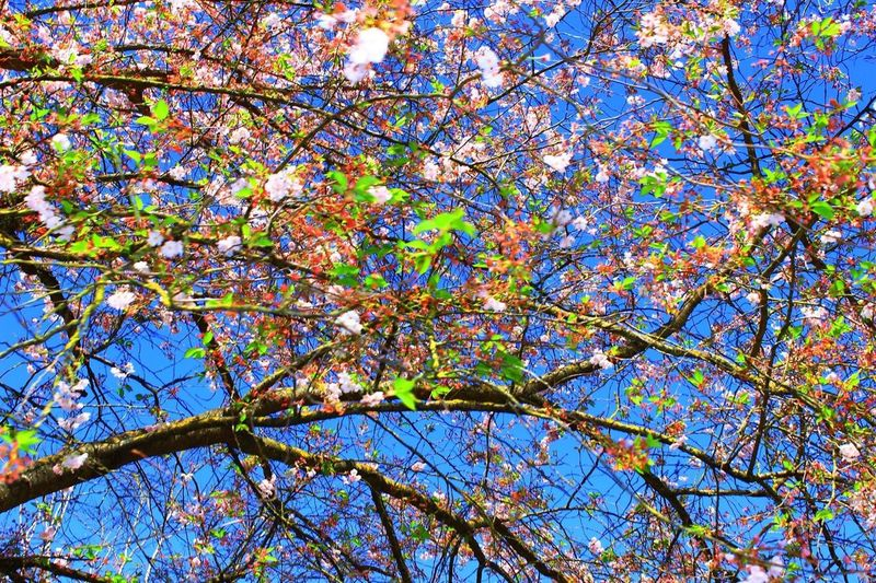 Colours The Natural World Trees Tree_collection  TreePorn Rural Basque EyEm Bestseller North Of Spain Natura World BasqueCountry Spring