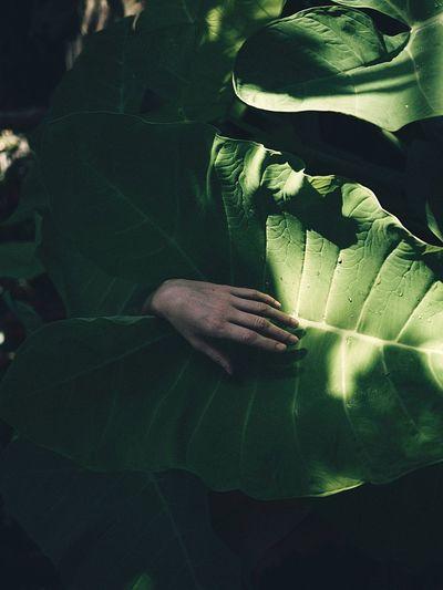 Hand On Leaf