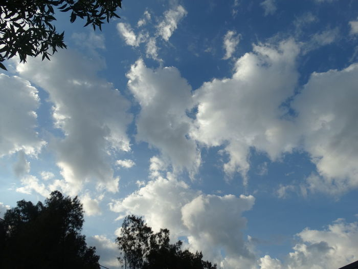 Tree Cloud - Sky Sky Nature Day Outdoors No People Blue Forest Beauty In Nature