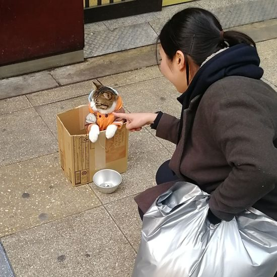 Do not provoke me, Human! Street Cat Cats Of EyeEm Outdoors Feline Cat Streetphotography Street Pet EyeEm Selects Animal Themes Cute KAWAII Animal Japan OSAKA Homeless Show Jacket City Urban Cats One Person People Young Adult Artist Cardboard Box Day Young Women
