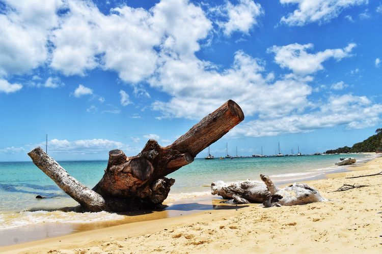 Water Sky Cloud - Sky Beach Sea Land Nature Sand Day Beauty In Nature Tranquility Tranquil Scene Horizon Over Water Scenics - Nature Nautical Vessel No People Tree Horizon Non-urban Scene Driftwood Outdoors