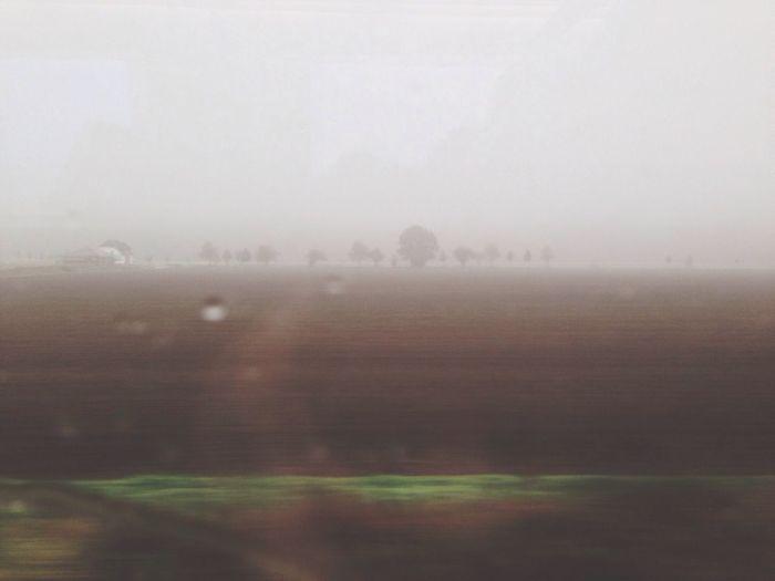 сквозь туманы Foggy