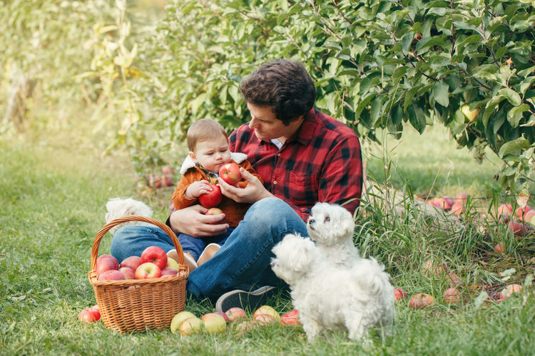 Father feeding apple to son by dogs at forest