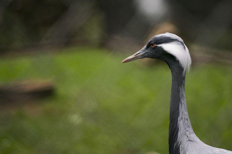 Close-up of gray crane
