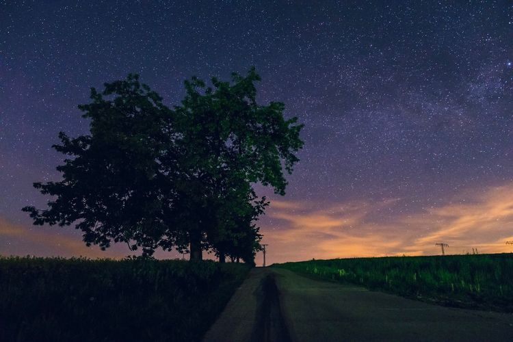 My first Astro-Photography Try. Tree Star - Space Nature Road Night Landscape Sky Astronomy Star Galaxy Cosmos Field Scenics Stars