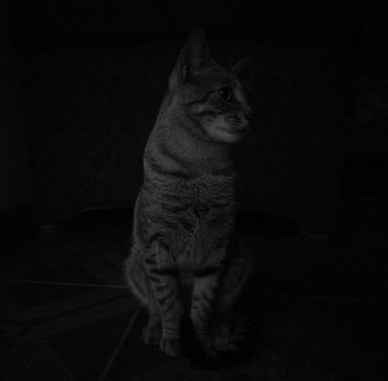 """Mango"" Cats Of EyeEm Lowlightphotography Huawei P9 Leica Polular Monochromatic This Sells Cat Dog"