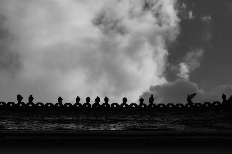 pigeons on a roof In A Row Perching Pigeons Silhouette Sky Street Street Photography Streetphotography