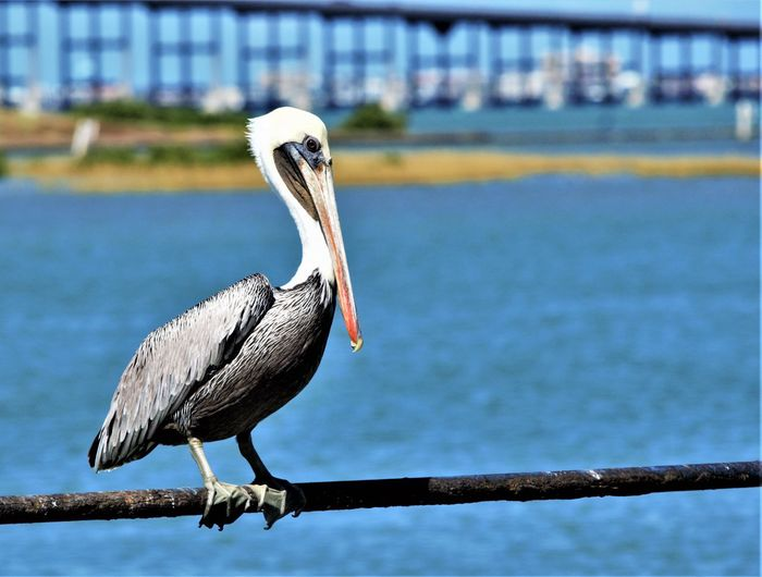 Close-up of bird perching on railing against lake