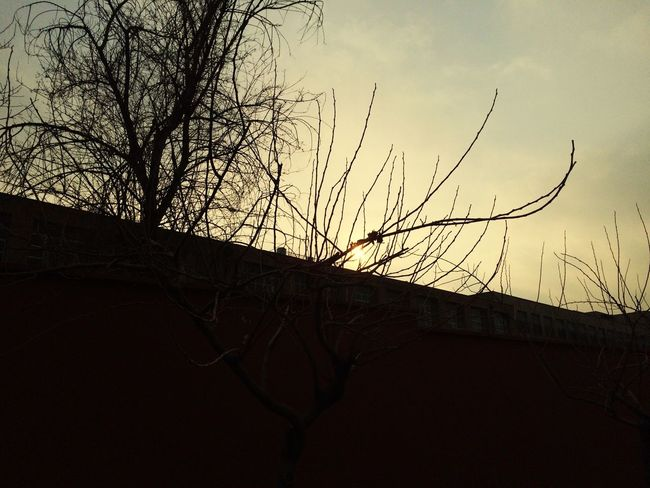 IPhoneography Sunset Sun Sun_collection Sunset_collection Sunlight Trees Tree TreePorn