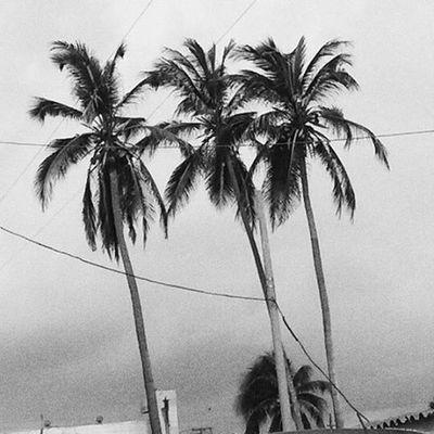 The Three Musketeers🌴 ---------------------------------- Vscogood Vscocam VSCO IgersVenezuela Igers IGDaily Photooftheday Picoftheday Insta_ve Venezuela Ig_falcon Vscocamvenezuela Shot Palm Beach