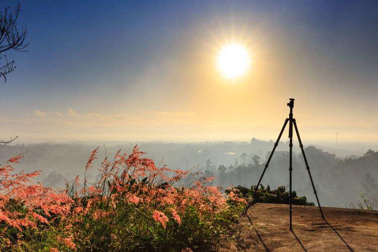 Tripod on the peak ready for photography. foggy background, the fog is pink due to first strong sun rays. Autumn Backgrounds Beatiful Camera Cloud Colors Dawn Environment Evening Fog Foggy Morning Forest Hill Hobby Horizon Lanscape Mist Mountain Nature Outdoors People Photographer Pink Grass  Scenery Tripod
