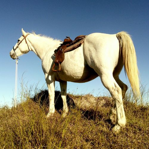 Quarter Horse Looking Away While Standing On Grass