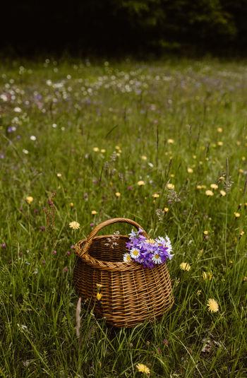 View of purple flowering plant on field