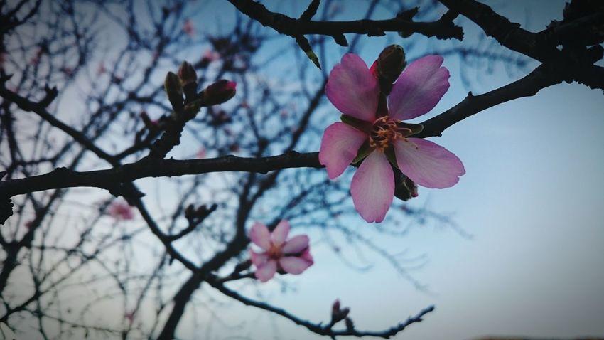 Flower Hello World Popular Photos 2016 Photo EyeEm Beauty Portrait Taking Photos January Nature Saturday