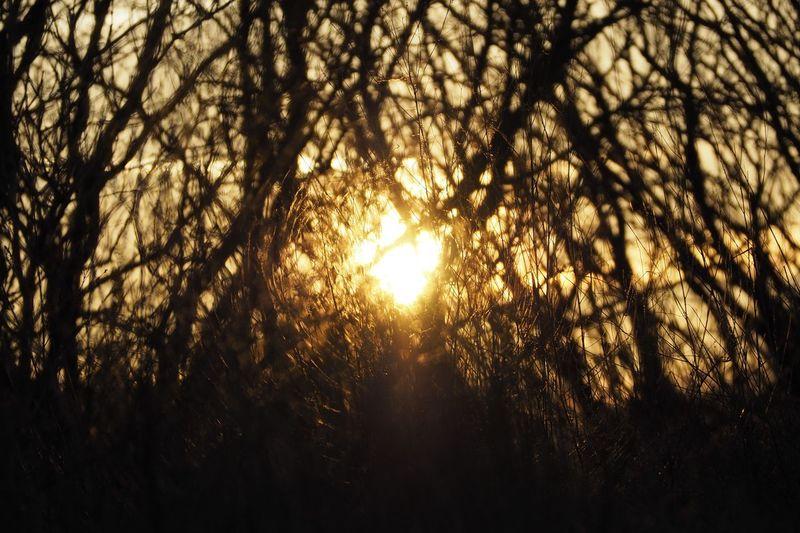 Tree Branch Tree Area Sunset Forest Sunlight Silhouette Sun Sunbeam Streaming Shining