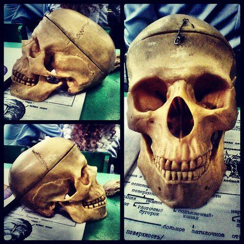 Anatomy SBMK Group_14F