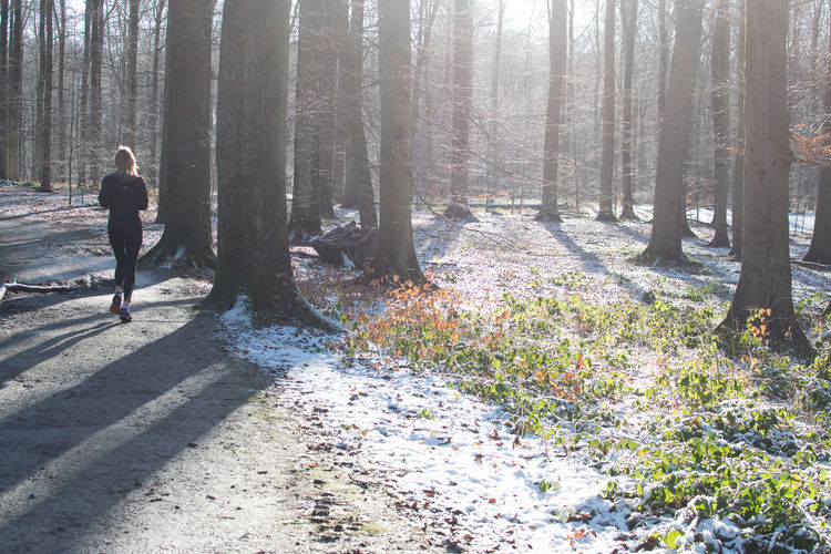 Cold Footpath Forest In The Forest Light Light Nature Nature Outdoors Running Showcase: January Snow Sonian Forest Tree Winter Wintertime Woman Healthylife The Purist (no Edit, No Filter) Fitness Here Belongs To Me Alternative Fitness Finding New Frontiers