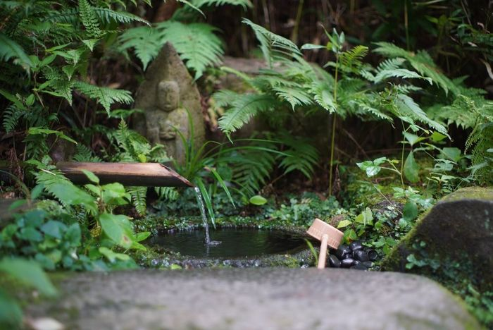 Growth Plant Leaf Nature Outdoors No People Day Water Forest Beauty In Nature Close-up Japan Photography Sony Kamakura