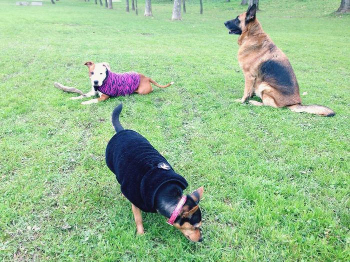 Dia de reyes y peludas I Love My Dog Dog Love My Dogs Are Cooler Than Your Kids AdoptDontShop Stanfordshireterrier Staffordshirebullterrior Katyperry