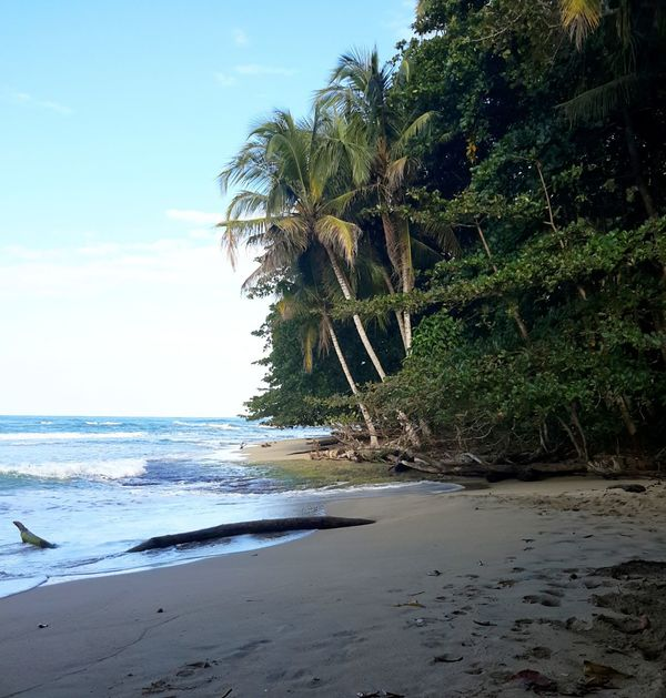 beaches of southern costa rica 2 Natural Beauty Beach Photography Traveling Costa Rica Beach Life Lifes A Beach Palm Trees What I Did Today