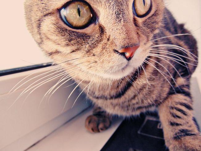 Котик котэ кот пупсик няша😺 Природа усатик