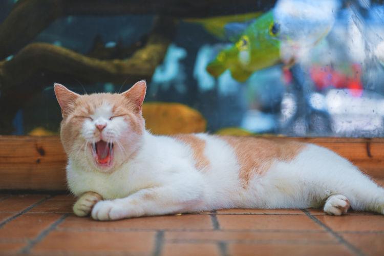 Cat lying down on floor
