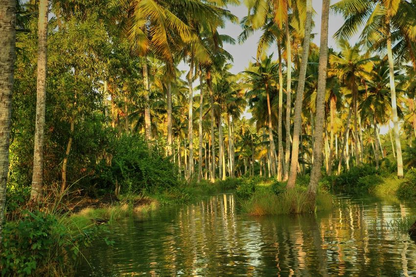 Neyyardam Kerala India Palm Trees Palm Tree India Indiapictures India_ig India_travels Indianphotography Indiatravelgram