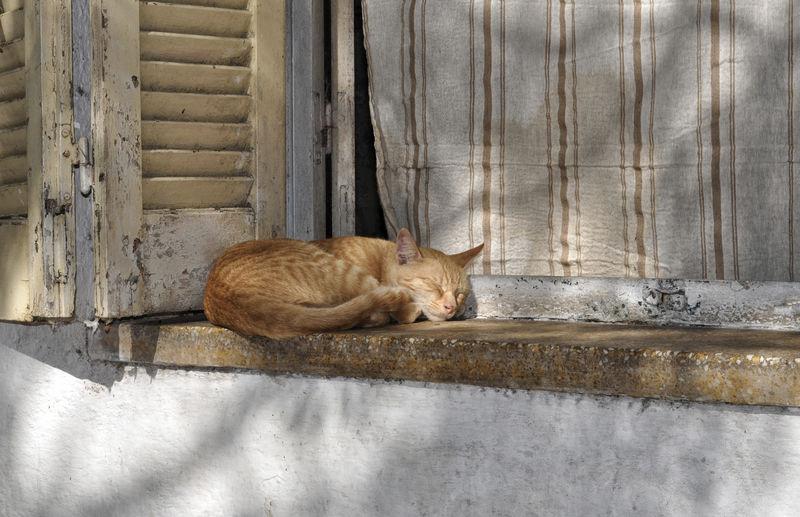 Siesta EyeEm Animal Lover EyeEm Best Shots EyeEm Selects EyeEm Gallery Kitty Siesta Stories From The City Cat Cozy Kitten Lazy Nap Pet Sleeping Sleeping Cat Sunshine Window